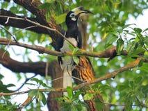 Bird, Fauna, Beak, Ecosystem stock photos
