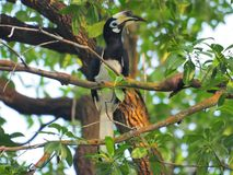 Bird, Fauna, Beak, Ecosystem stock photo
