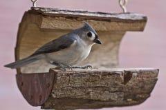 Bird, Fauna, Beak, Feather Stock Image