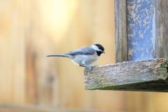 Bird, Fauna, Beak, Feather Royalty Free Stock Images