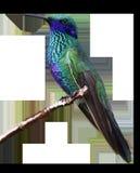 Bird, Fauna, Beak, Feather Royalty Free Stock Photo