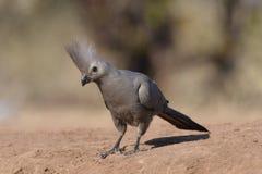 Bird, Fauna, Beak, Feather Stock Photos