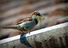 Bird, Fauna, Beak, Feather Stock Photo