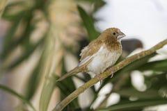 Bird, Fauna, Beak, Finch Stock Images