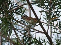 Bird, Fauna, Beak, Flora stock photography