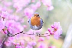 Bird, Fauna, Beak, Flower Stock Photo