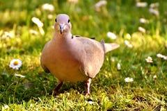 Bird, Fauna, Beak, Grass Royalty Free Stock Photography