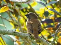 Bird, Fauna, Beak, Leaf Stock Photo