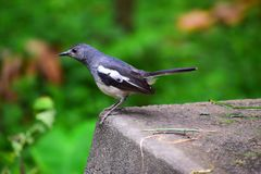 Bird, Fauna, Beak, Old World Flycatcher Royalty Free Stock Images