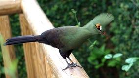 Bird, Fauna, Beak, Organism Stock Photo