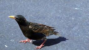 Bird, Fauna, Beak, Organism Royalty Free Stock Photography
