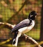 Bird, Fauna, Beak, Organism Stock Photos