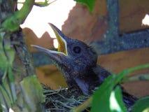 Bird, Fauna, Beak, Organism Stock Image