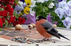 Bird, Fauna, Beak, Plant Stock Images