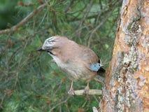 Bird, Fauna, Beak, Sparrow royalty free stock images