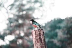 Bird, Fauna, Beak, Tree Stock Photos