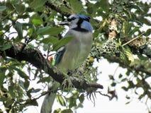 Bird, Fauna, Beak, Tree Royalty Free Stock Photo