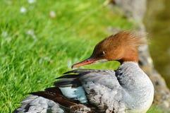 Bird, Fauna, Beak, Water Bird royalty free stock images