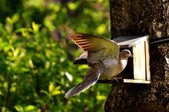 Bird, Fauna, Beak, Wildlife Stock Photo