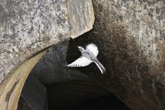 Bird, Fauna, Beak, Wing Stock Photo