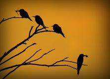 Bird, Fauna, Branch, Beak Royalty Free Stock Photos