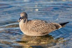 Bird, Fauna, Duck, Beak royalty free stock photos