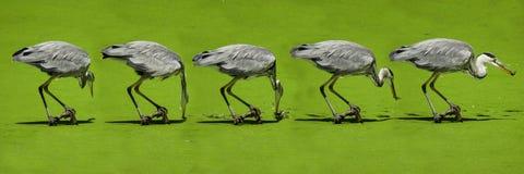 Bird, Fauna, Ecosystem, Beak Stock Images