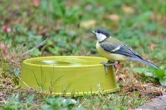 Bird, Fauna, Ecosystem, Beak Royalty Free Stock Image