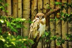 Bird, Fauna, Ecosystem, Beak Royalty Free Stock Photos