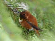 Bird, Fauna, Ecosystem, Beak Stock Photos