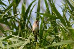 Bird, Fauna, Ecosystem, Beak Stock Photo