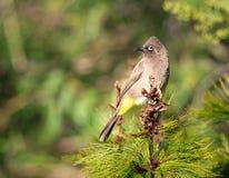 Bird, Fauna, Ecosystem, Beak royalty free stock photo