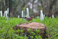 Bird, Fauna, Ecosystem, Nature Reserve Stock Images