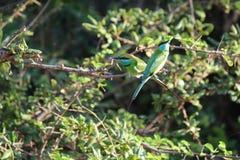 Bird, Fauna, Ecosystem, Wildlife Stock Photos