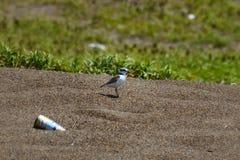 Bird, Fauna, Ecosystem, Wildlife Stock Image