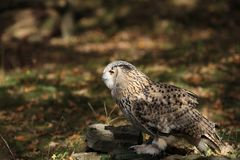 Bird, Fauna, Falcon, Bird Of Prey Royalty Free Stock Photo