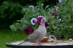 Bird, Fauna, Flora, Beak Royalty Free Stock Images
