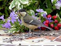 Bird, Fauna, Flora, Beak Royalty Free Stock Photos