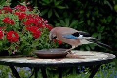 Bird, Fauna, Flora, Beak Royalty Free Stock Photography