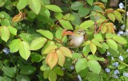 Bird, Fauna, Leaf, Beak Stock Photos