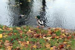 Bird, Fauna, Nature Reserve, Water Royalty Free Stock Image