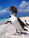 Bird, Fauna, Seabird, Beak stock photos
