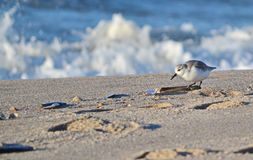 Bird, Fauna, Shore, Sky royalty free stock photo