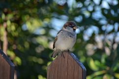 Bird, Fauna, Sparrow, Beak stock photography