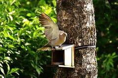Bird, Fauna, Tree, Beak Stock Photo