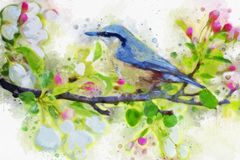 Bird, Fauna, Watercolor Paint, Flora Royalty Free Stock Image