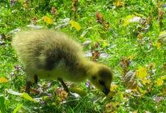 Bird, Fauna, Wildlife, Nature Reserve stock image