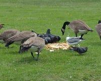 Bird Feast At The Park Stock Photo