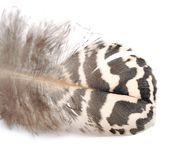 Bird feather Stock Images