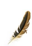 Bird feather. Over white background stock photography
